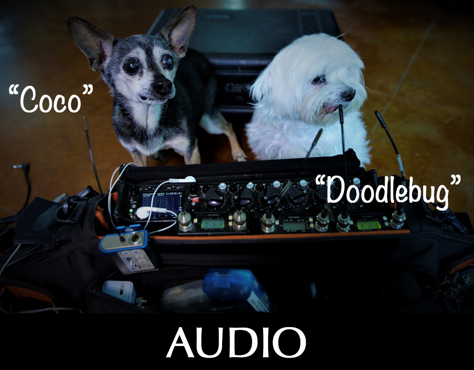 Audio gear with dogs named Coco and Doodlebug