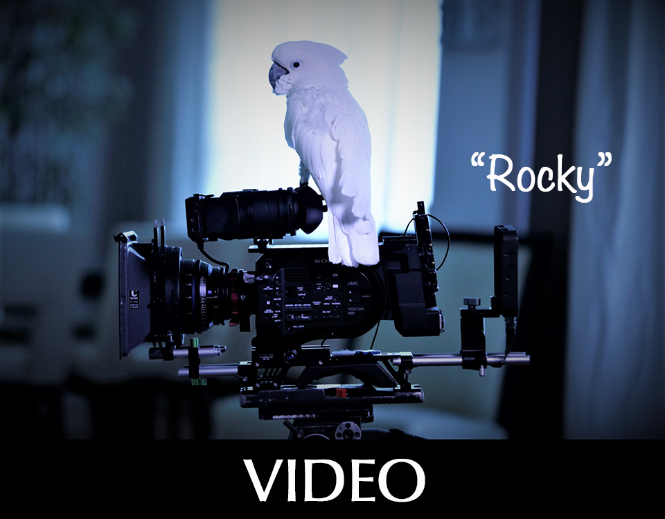 Video camera and white parrot named Rocky